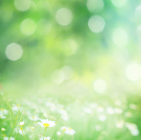 green blurred background Stockfoto