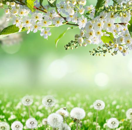 봄 배경 스톡 콘텐츠