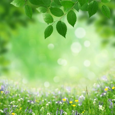 봄 스톡 콘텐츠 - 33134522