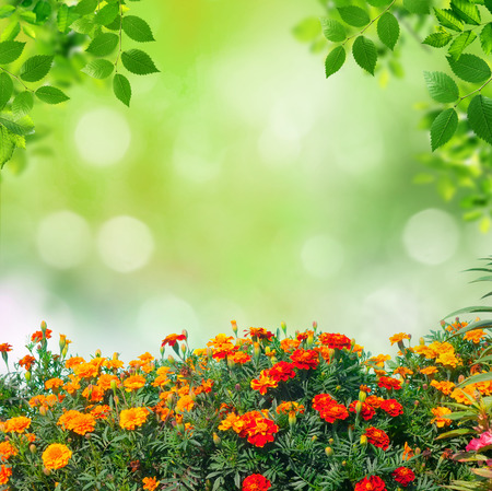 summer background Stock Photo - 32054938