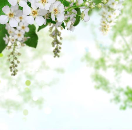 spring background Stock Photo - 32054940
