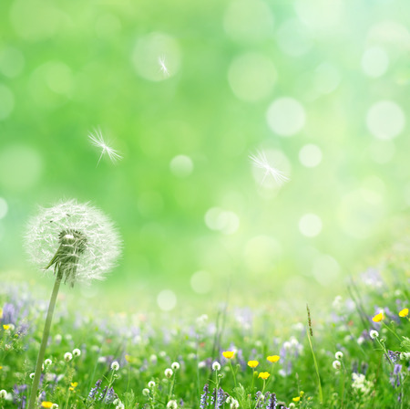 springtime  Foto de archivo