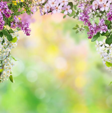spring background Stock fotó - 32052803