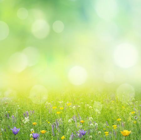 summer background  photo