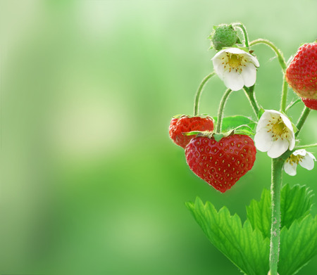 love symbols:  strawberries in shape of a heart  Stock Photo