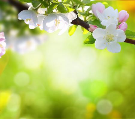 summer nature: spring background