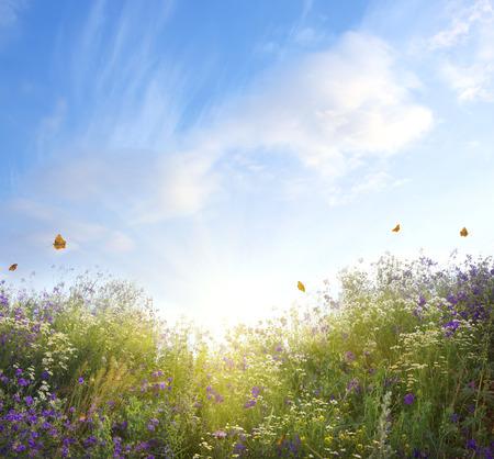 verano: paisaje de verano