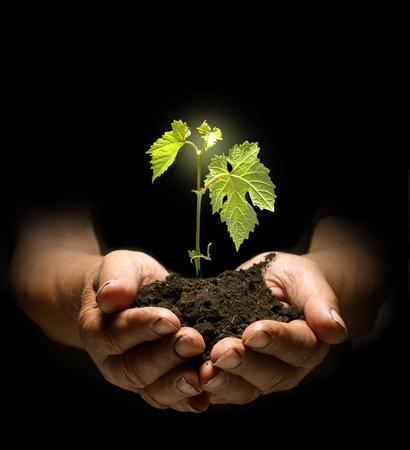 kleine plantengroei in handen