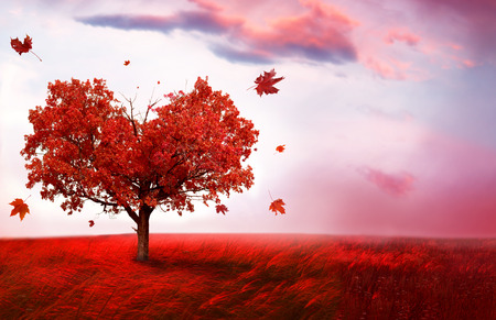 Autumn landscape with  love tree