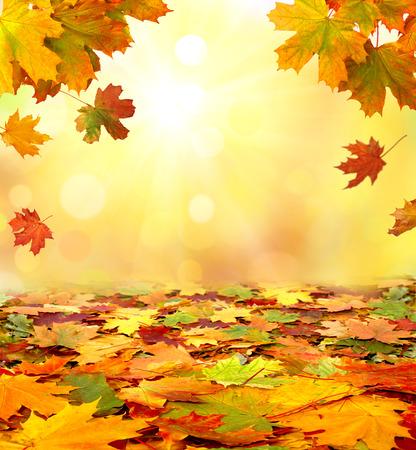 Autumn  leaves Фото со стока