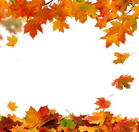 秋の落ち葉の白い背景で隔離