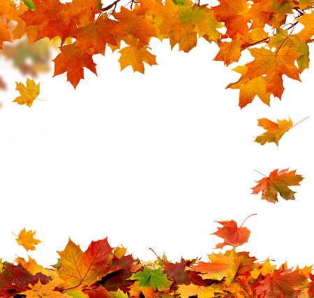 Herfst vallende bladeren op een witte achtergrond