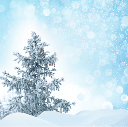 Winter Christmas background with fir tree photo
