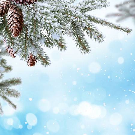 Winter Christmas background with fir tree branch with cones photo