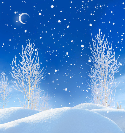 beautiful winter night landscape photo