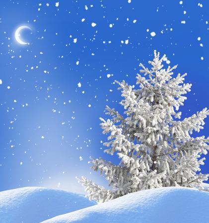 winter night landscape photo