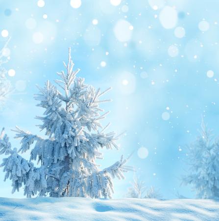 クリスマスのモミの木と冬の背景 写真素材