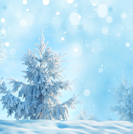 winter background  with christmas fir tree