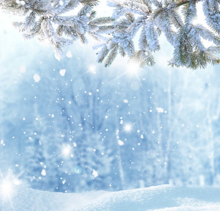 Winter Christmas background with fir tree branch