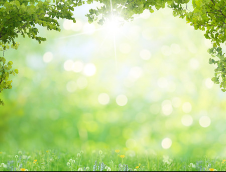 feuillage: fond d'été