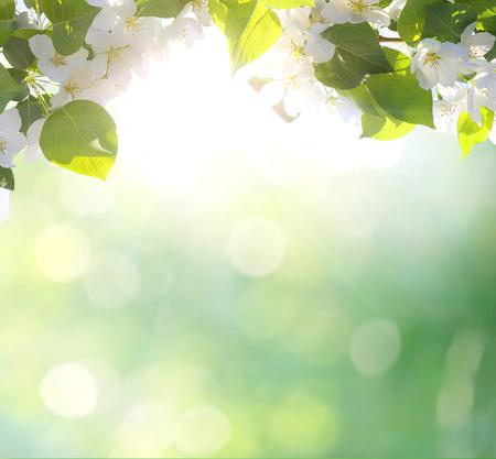 springtime: Spring blossom background
