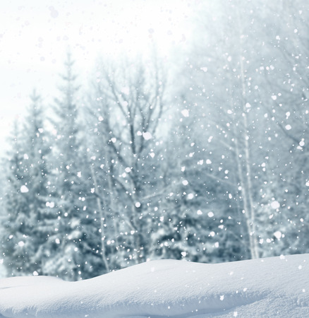 winter  christmas background photo