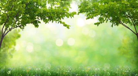 jardines flores: el verano de fondo