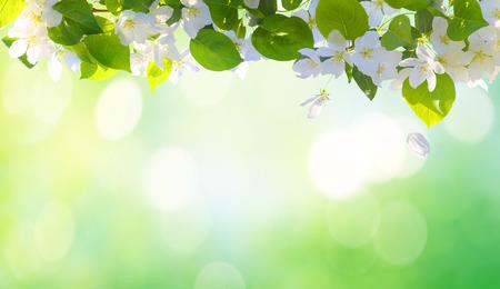 春の花の背景 写真素材