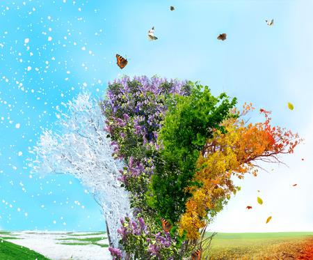 Saison de quatre arbres Banque d'images