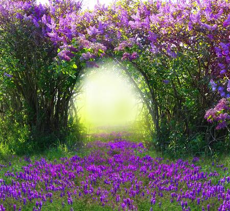 Magic spring forest Archivio Fotografico