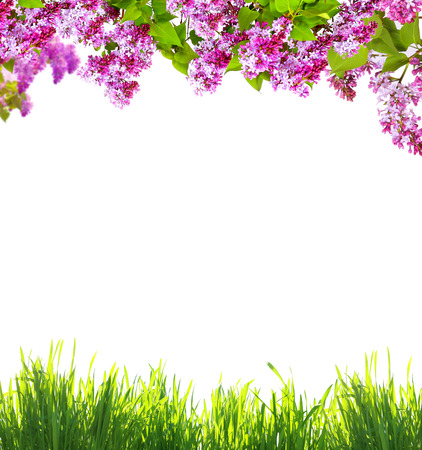 adjective: Spring flowers  and green grass on white background