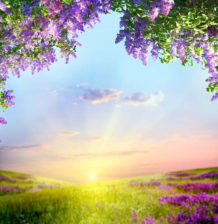 Wiosn? krajobraz Zdjęcie Seryjne