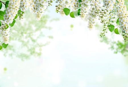 voorjaar achtergrond
