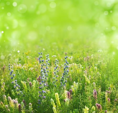 summer: лето фон Фото со стока