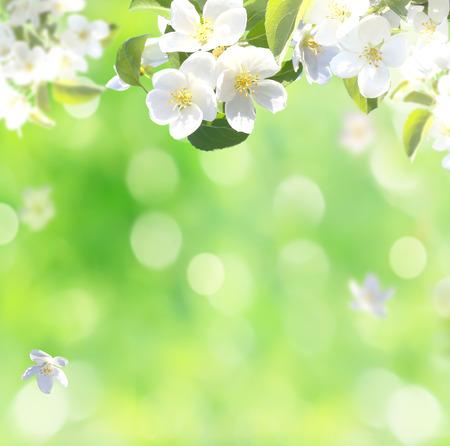 春の花背景