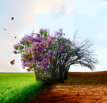 Eco concept. Live and dead tree
