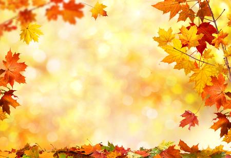 가을 배경과 단풍 나무 잎
