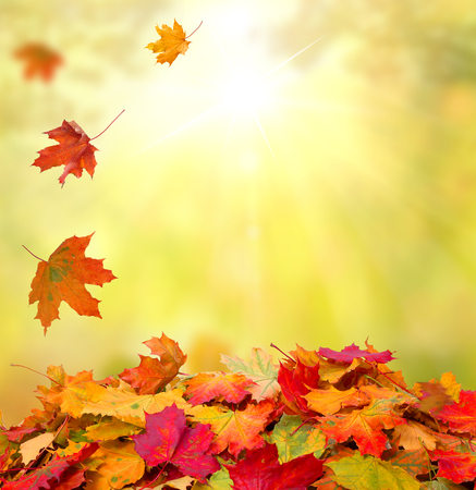 herfst bladeren Stockfoto