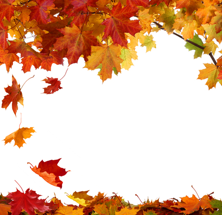 Isolated autumn maple leaves on white background