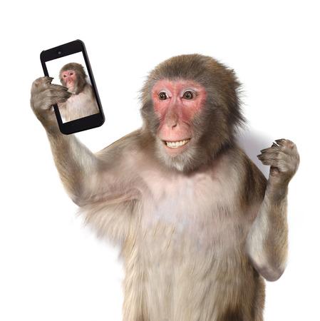animais: Macaco engraçado que toma um selfie e sorrindo, câmera