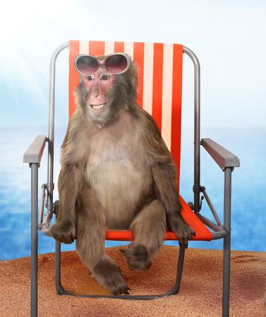 caras graciosas: mono divertido