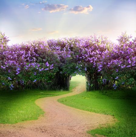 primavera: Camino en el bosque mágico de primavera