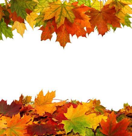 Herfst esdoorn vallende bladeren op een witte achtergrond Stockfoto