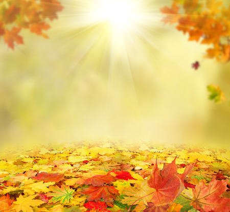autumn colors: autumn background Stock Photo