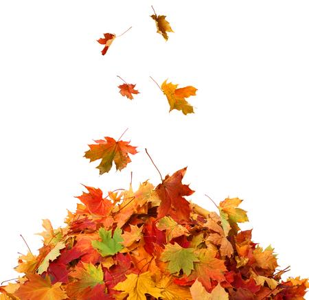 hojas secas: La pila de hojas de otoño Foto de archivo