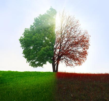 seasons: Season change. From summer to autumn. Stock Photo