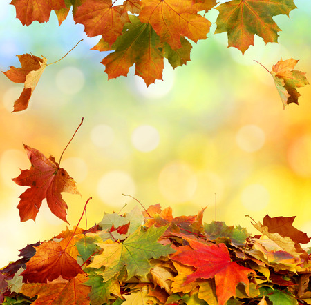 Autumn falling leaves 写真素材
