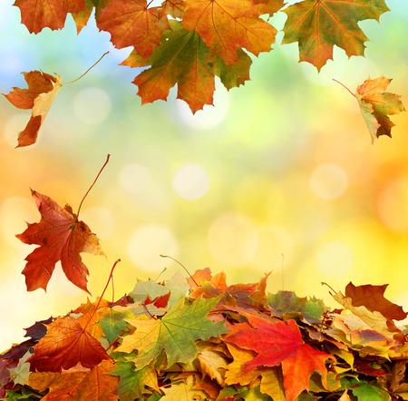 Autumn falling leaves Foto de archivo