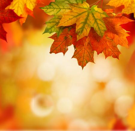 autumn background Archivio Fotografico