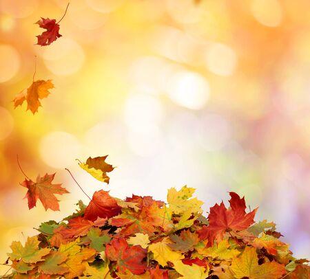 Herfst vallende esdoornbladeren Stockfoto